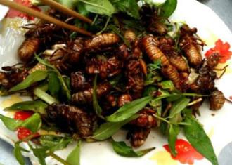 Ve sầu chiên giòn - món khoái khẩu ở Bình Phước