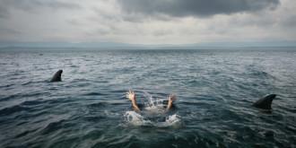 Cá mập tấn công du khách liên tiếp ở Hawaii