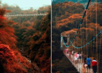 Cầu kính treo cao 50 m mở cửa tại Đài Loan