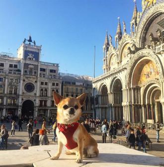 Chú chó đi du lịch nhiều nhất thế giới