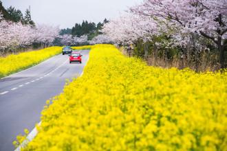 Đảo Jeju, thiên đường ẩm thực