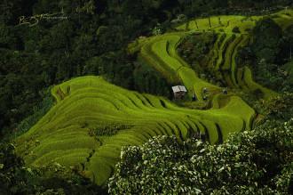 Bộ ảnh 'một thoáng Việt Nam' đẹp lung linh trên báo nước ngoài