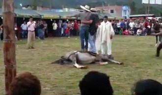 Du khách bất bình trước cảnh nhảy trên ngựa sống ở Peru