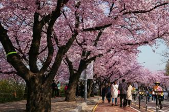 Saigontourist giảm 10 triệu đồng tour du xuân Hàn Quốc