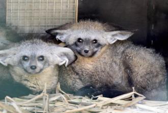 Các loài động vật đang có mặt tại Vinpearl Safari