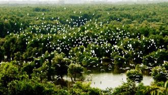 Ngày hội du lịch Đồng Tháp tại Vườn quốc gia Tràm Chim