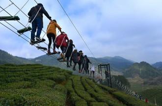 Lối đi bộ trên không ngắm đồi chè ở Trung Quốc