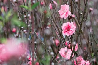Chợ hoa Quảng Bá ngày cận Tết