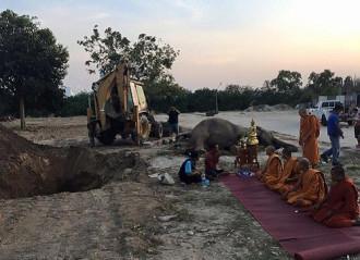 Voi chết vì sốc sau màn bắn pháo hoa tại Thái Lan