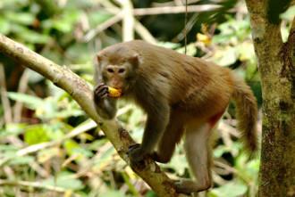 Voọc mắc cỡ trong Vườn quốc gia Cát Tiên