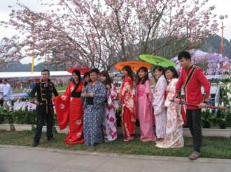 Cơ hội mặc kimono chụp ảnh với hoa anh đào ở Hạ Long