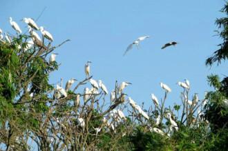 Những hòn đảo mang tên loài vật ở Việt Nam
