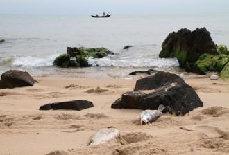 Cá chết khiến du lịch biển Bắc Trung Bộ 'ngồi trên đống lửa'