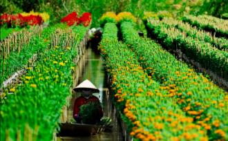 Ngỡ ngàng trước làng hoa trăm tuổi ở Sa Đéc