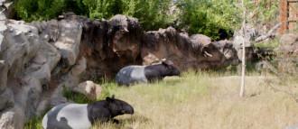 Hội thảo hiến kế bảo vệ động vật nguy cơ tuyệt chủng