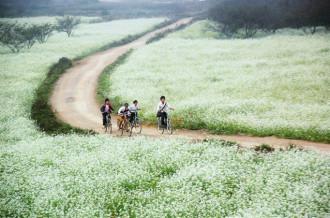 Mộc Châu trắng tinh khôi trong tiết giao mùa