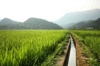 Thung lũng xanh mướt ở Mai Châu