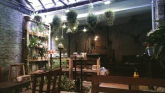 Quán cà phê dạy trồng cây xanh trong ngõ nhỏ Hà Nội