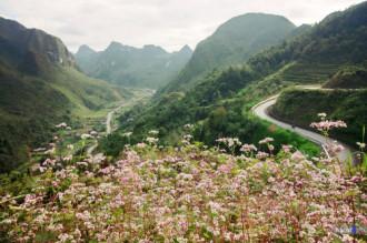 Lễ hội hoa tam giác mạch sẽ tổ chức vào tháng 10