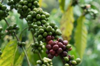 Buôn Mê Thuột - điểm đến cho những tín đồ mê cà phê