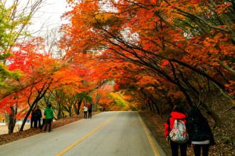 Khách Việt đi du lịch Hàn Quốc tăng đột biến dịp mùa thu