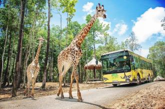 Những loài động vật đặc biệt tại Vinpearl Safari