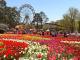 Lễ hội hoa Floriade ở Australia