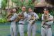 Vinpearl Safari đón thêm 4 chú hổ quý Bengal